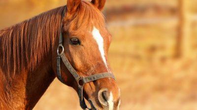 horse-1201143_1920